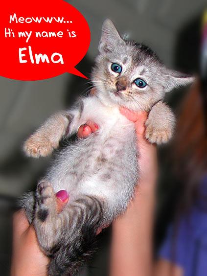 elma-newfamily.jpg