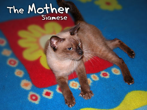siamese-themother.jpg