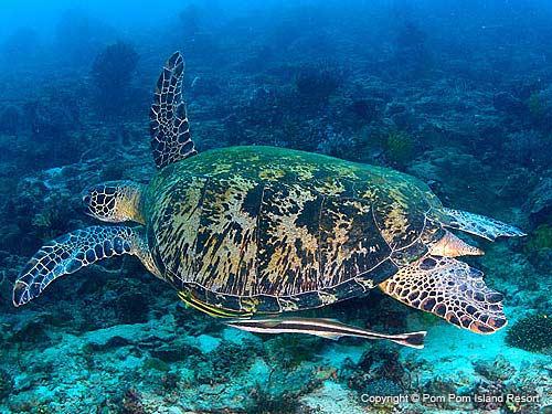 hawksbill-turtle-new.jpg