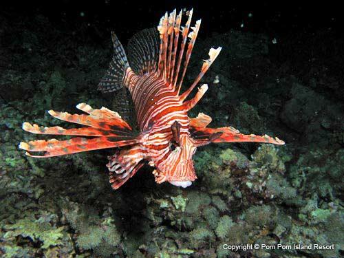 scorpionfish-new.jpg
