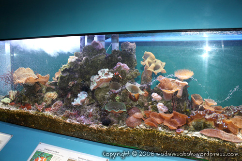 ums-aquariummuseum_7092