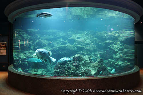 ums-aquariummuseum_7170