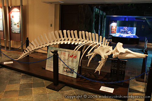 ums-aquariummuseum_7264