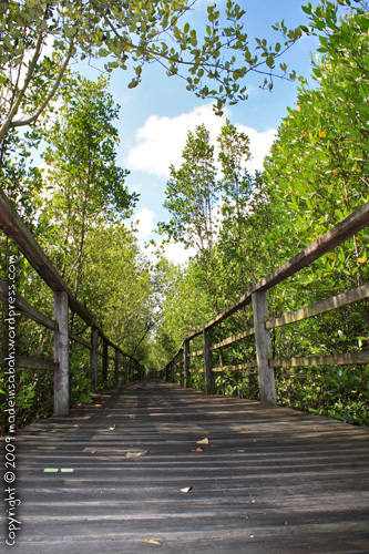 kk_wetland_centre_kotakinabalu_0556