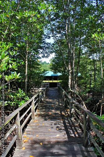 kk_wetland_centre_kotakinabalu_0677