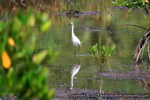 kk_wetland_centre_kotakinabalu_0701