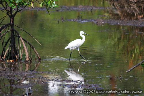 kk_wetland_centre_kotakinabalu_0703
