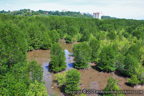 kk_wetland_centre_kotakinabalu_0747