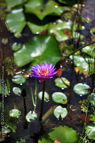 kk_wetland_centre_kotakinabalu_0800